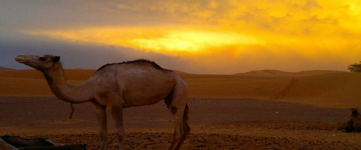 Morocco Sahara desert Tour Casablanca 4 Days
